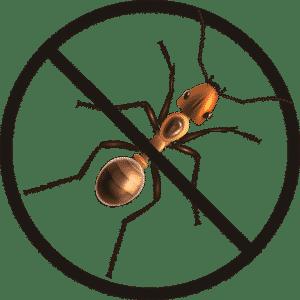Expert gestion des nuisibles : dératisation, punaises de lit
