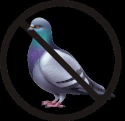 PigeonRealisteSTOPcarre
