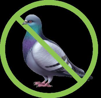 PigeonRealisteSTOPcarre-vert