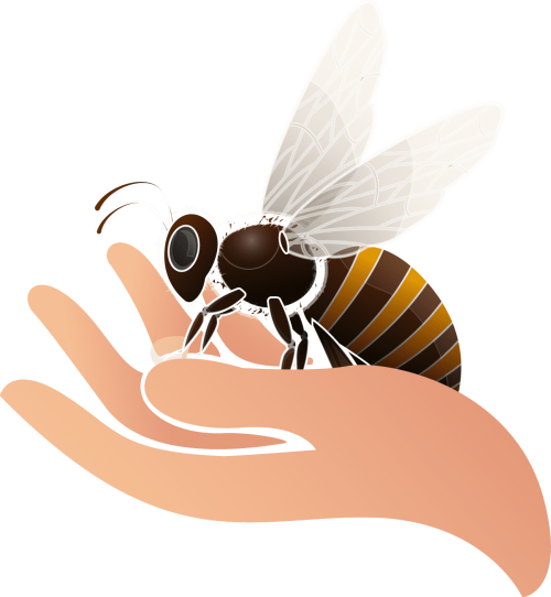 TESTprotegeons-abeilles-vecto-adonis-france