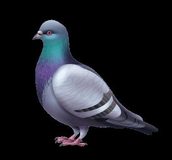 pigeon-repulsif-eloignement-adonis