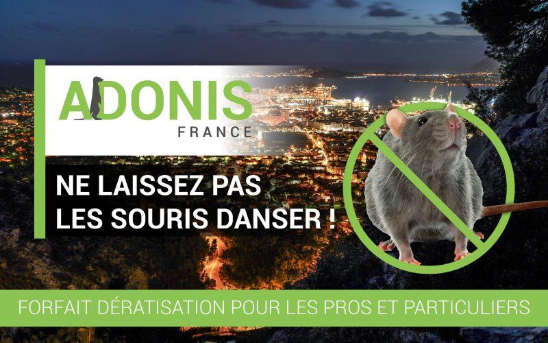 Deratisation-rongeurs-Adonis-France